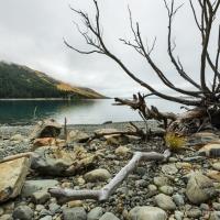 Misty morning, Lake Tekapo