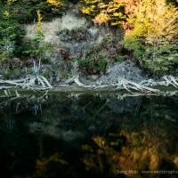 Lake Manapouri reflections
