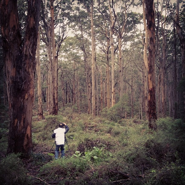 Shooting in Boyanup Forest