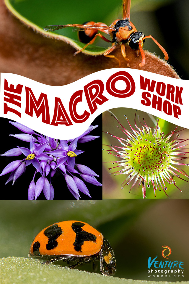 The Macro Photography Workshop
