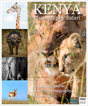 Kenya Wildlife Photography Safari 2018