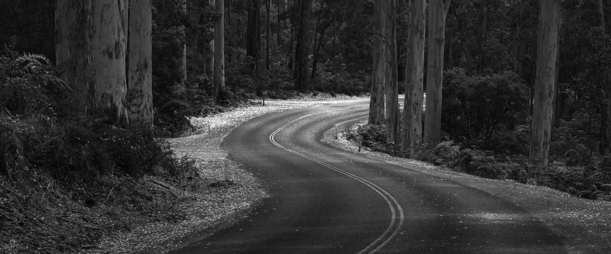 Boranup Forest Road