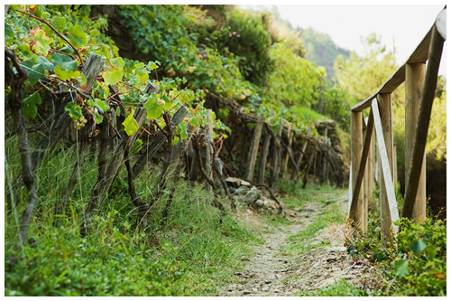 Vineyard trail