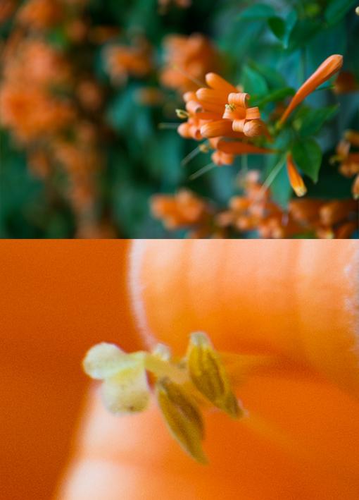 Flowers taken at f2.8