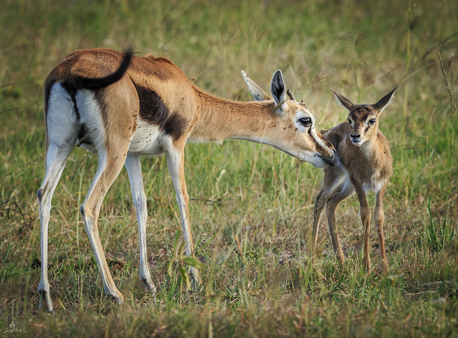 Gazelle and child