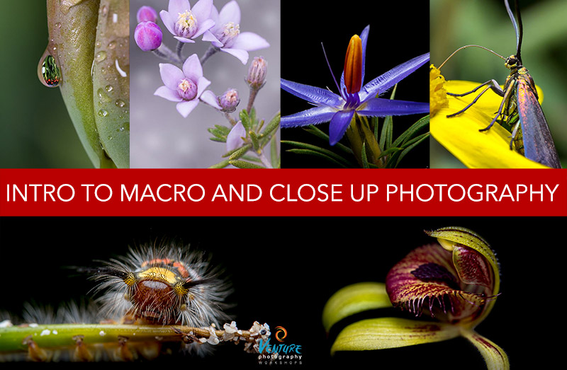 Intro to Macro and Close Up Photography Poster