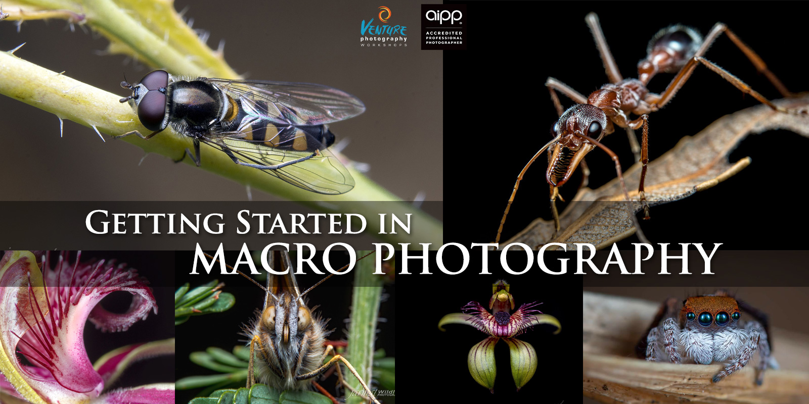Getting Started in Macro Photography