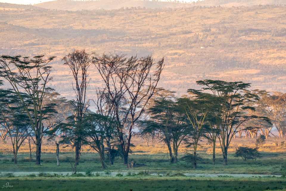 Lake Nakuru Sunrise