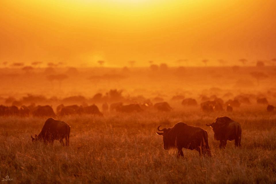 Maasai Mara sunset