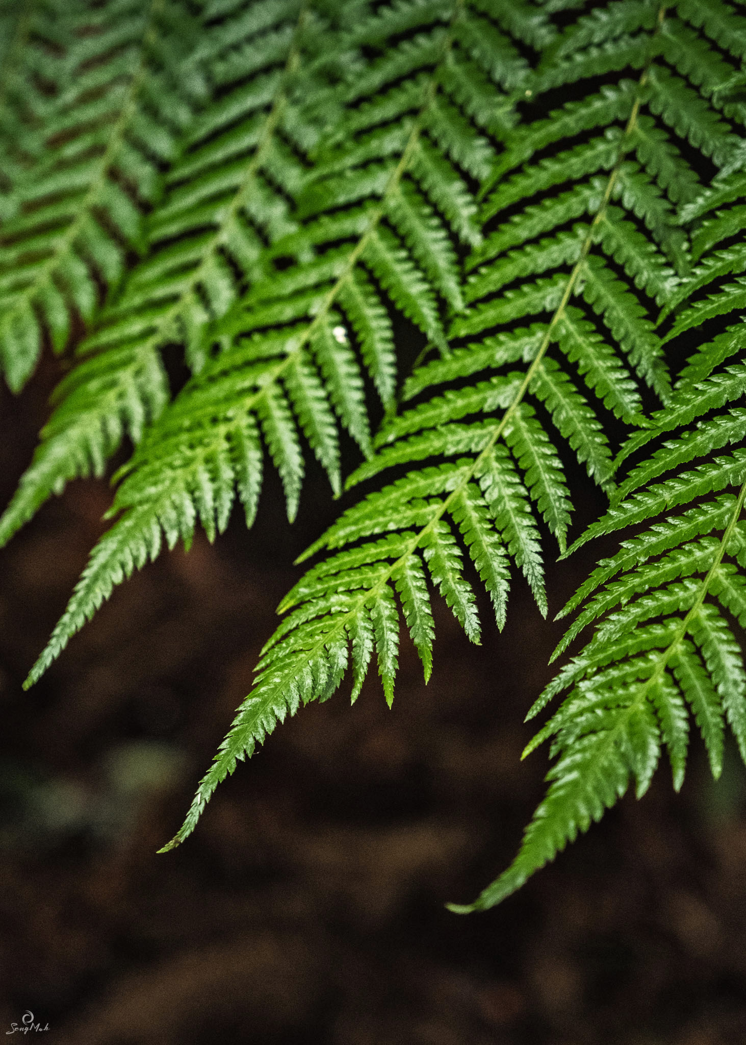 Forest glade fern detail