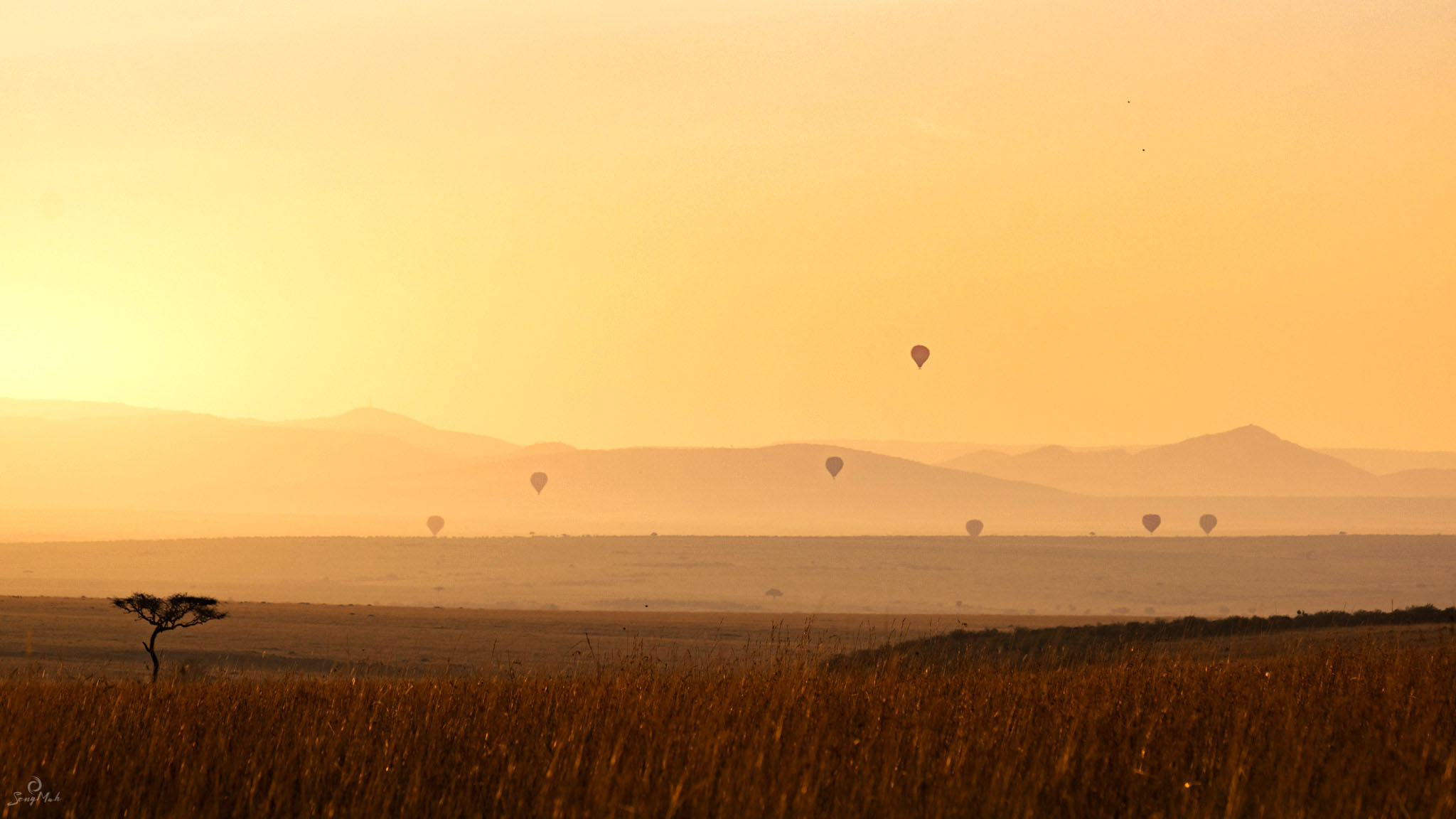Hot air balloons at sunrise in the Maasai Mara