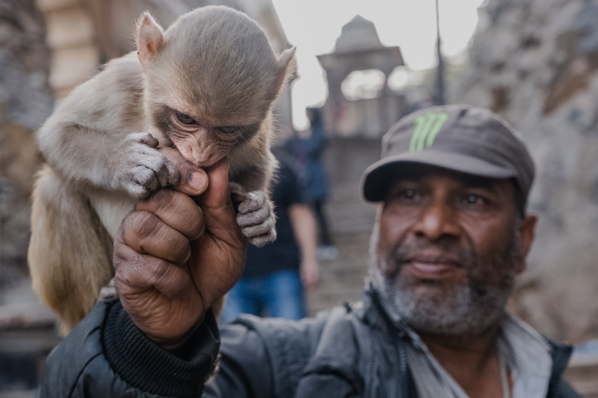 Man feeding a baby monkey