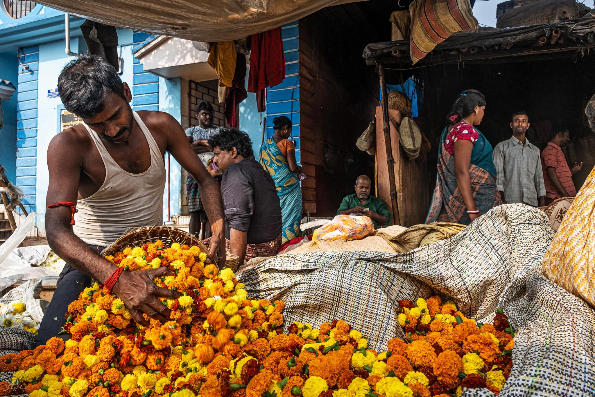 Mullick Ghat flower market.