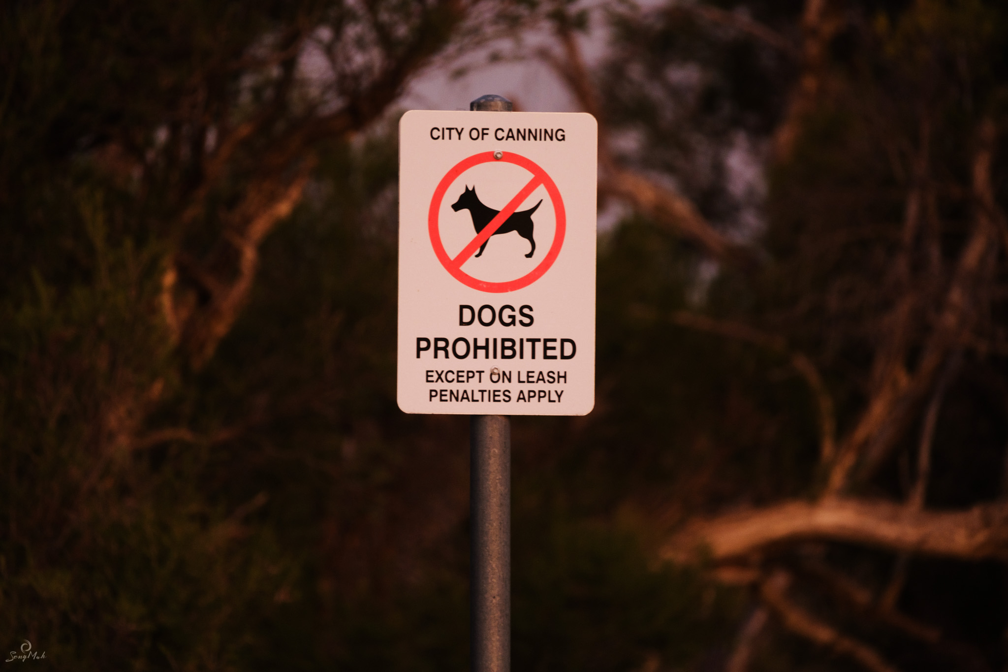 Dogs disallowed in park sign