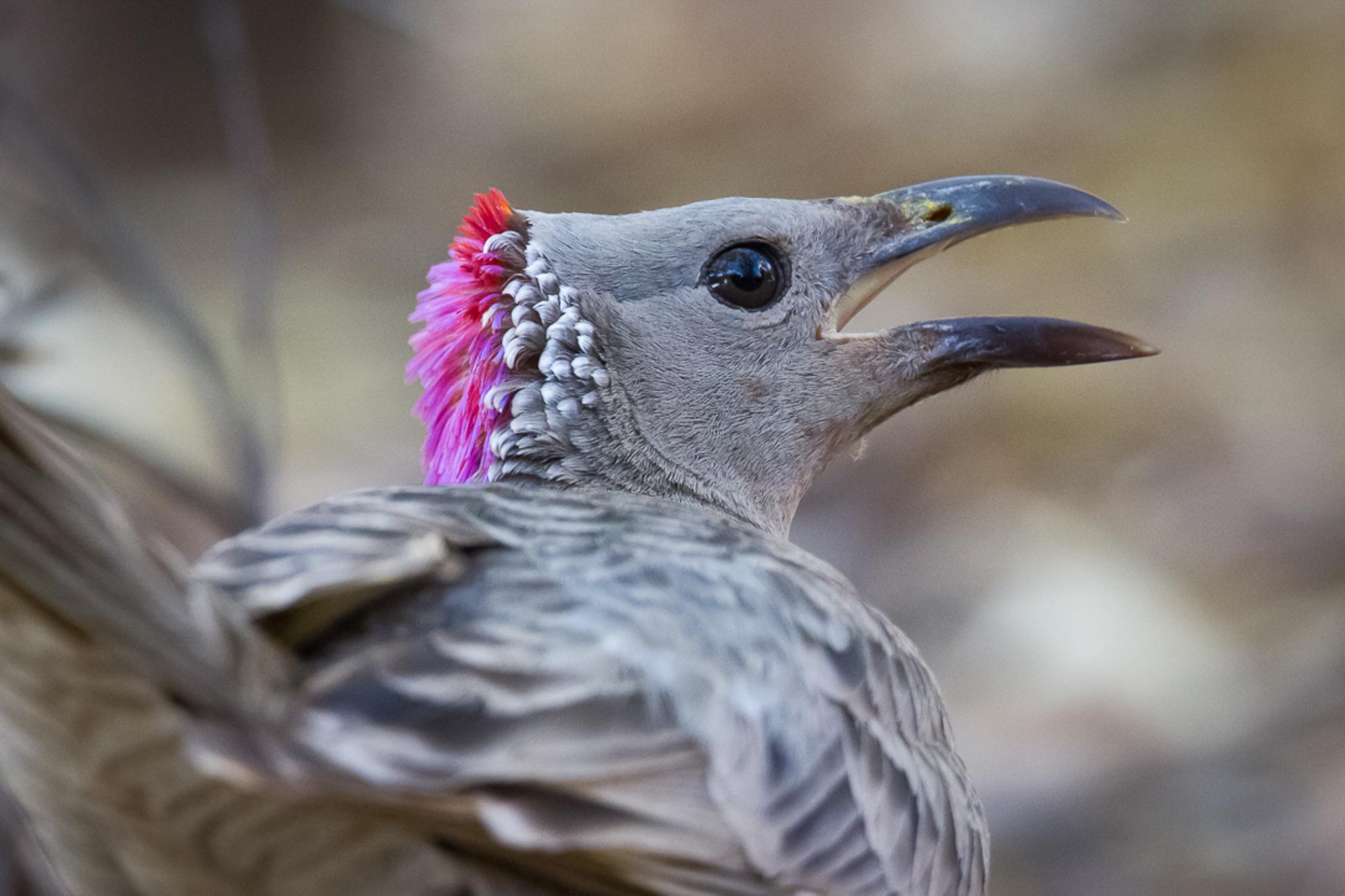 Kimberley birdlife