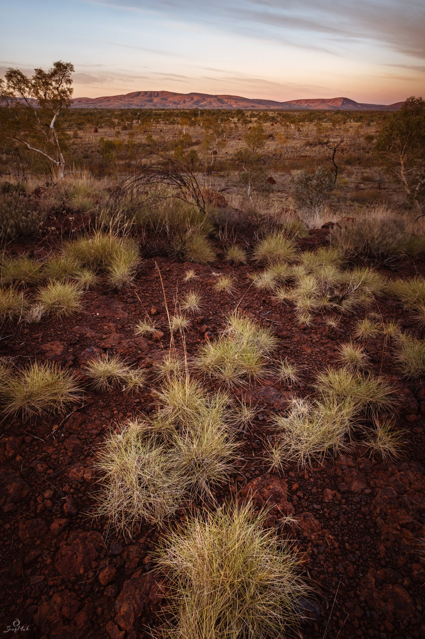 Spinifex sunrise