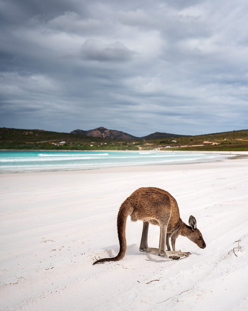 Lucky Bay with kangaroo