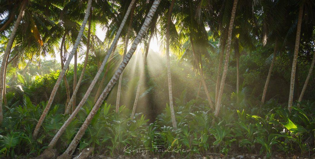 Coconut grove, Christmas Island